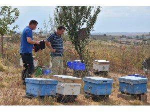Tekirdağ Büyükşehir Belediyesinin arıcılığa desteği sürüyor