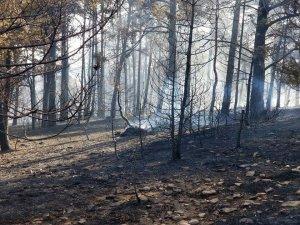 Akdağmadeni'nde orman yangını
