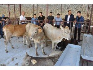 Gümüşhane'de Genç Çiftçilerin düveleri teslim edildi