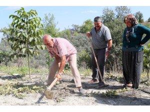 Mersin'de üreticiye nergis çiçeği soğanı desteği