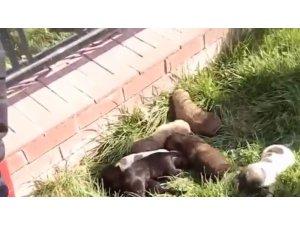 Boğulmak üzere olan 7 yavru köpek kurtarıldı