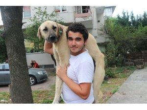 Hasta köpeği tedavi ettirmek için sırtında taşıyan koca yürekli genç konuştu