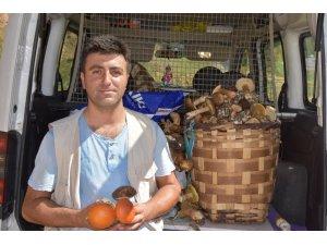 Sinop'un ormanlarından fesleğen mantarı fışkırıyor