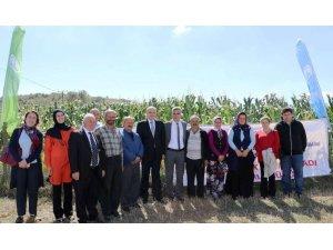 Samsun'da mısır ve patates hasadı tarla günü