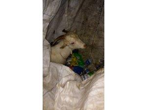 Afgan hurdacının çekçeğinden çıkan pes dedirtti