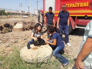 Ölmek üzere olan köpek vatandaşların duyarlılığı sayesinde kurtarıldı