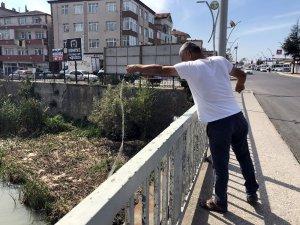 """Alaplı'da """"İsrail sazanı"""" avı başladı"""
