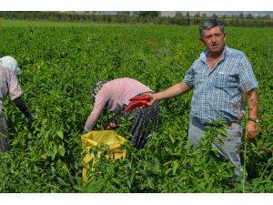 Yenişehir çiftçisinin yüzü gülüyor