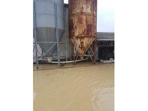 Kaynarca'daki sel felaketinde 17 bin tavuğu telef etti