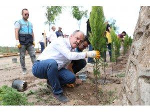Pamukkaler Belediyesi'nin 'vizyon projesi' yeşilleniyor