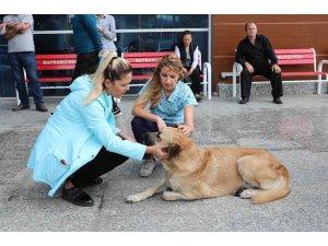 Bayraklı'da sokak hayvanları sağlık kontrolünden geçirildi