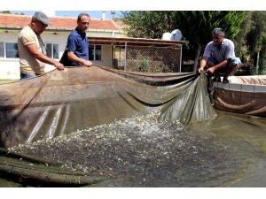 Baraj ve göletlere 2 milyon 750 bin yavru balık bırakıldı