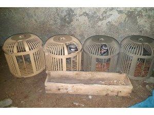 Kınalı keklikler kaçak avcılardan elinden kurtarıldı