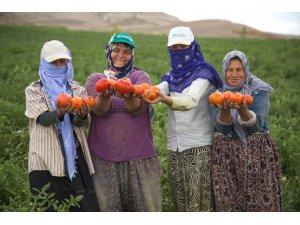 Ankara Büyükşehirden tarım ve hayvancılığa tam destek