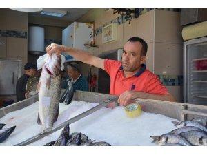 Sinoplu balıkçılara 7 kilogramlık levrek sürprizi