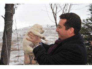 Başkan Bakıcı'nın 4 Ekim Hayvanları Koruma Günü mesajı