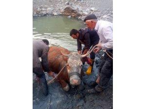 Gölete düşen ineği itfaiye ekipleri kurtardı