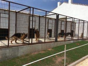 Eskişehir'de köpek oteli ve çiftliği