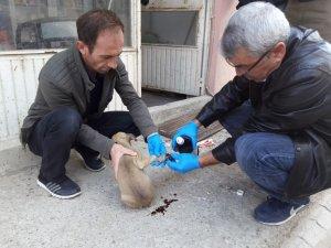 Otomobilin çarptığı köpek yavrusu tedavi altına alındı