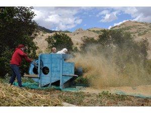 Dededen kalma harman makinesiyle buğday ve fasulye hasadı