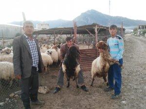 Koyunlarını bulana para ödülü verecek