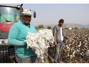 Pamuk üreticisi isyanda