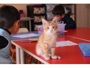 Tedavi edilen yavru kedi, sınıfın üyesi oldu