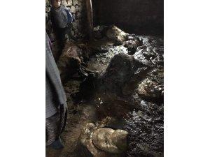Ağrı'da kurtlar 30 koyunu telef etti