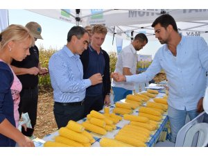 Türk tatlı mısır tohumu dünyanın gündeminde