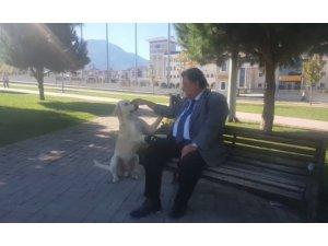 Sokak köpeği kendisini böyle zorla sevdirdi