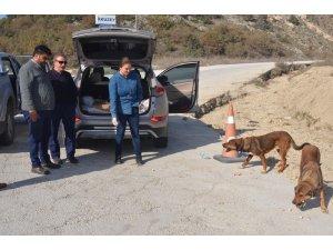 Ormana terk edilmiş sahipsiz köpeklere Bozüyük Belediyesi sahip çıktı