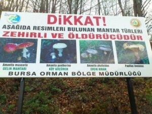 Uludağ'da afişle zehirli mantar uyarısı