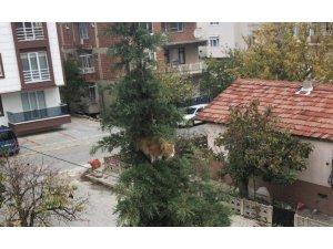 Ağacın tepesinde kedi kurtarma operasyonu