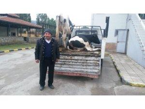 Çine'de çalınan hayvanlar Jandarma tarafından bulundu