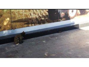 Kırşehir'de kedinin fare ile oyunu kameralara yansıdı