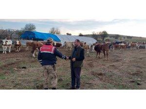 Jandarma, kayıp hayvanları 'drone' ile buldu