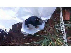Vicdansızlar yedi yavru köpeği bir çuvala koyup attılar
