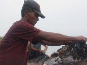 Balinanın midesinden 6 kilo çöp çıktı