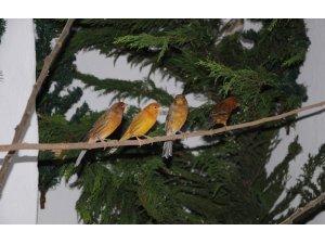 Mersin'de kafes evdeki kuşlar özgürlüğe uçtu