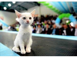 İstanbul'u bu hafta sonu 'Mutlu Kediler' işgal edecek