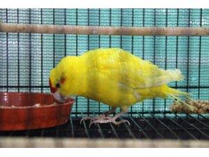 Kuş yetiştiricileri bu yıl satıştan memnun değil