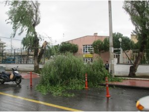 Fırtına okul girişinde ağaçları devirdi