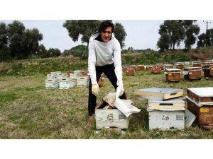 Arılarda kış bakımlarına başlandı