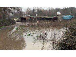 Kemerburgaz'da köpek eğitim merkezini sel bastı: 8 köpek öldü