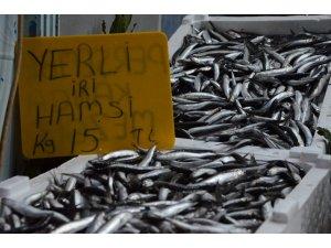 Karadeniz'de yerli hamsinin fiyatı yükseliyor