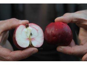 """""""İçi ve dışı kırmızı elma"""" tescillendi"""