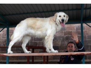 AFAD'ın hayat kurtaran köpeği 'Pasha' başarıya doymuyor