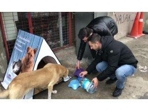 Vatandaşlardan sokak hayvanlarına pratik yuva