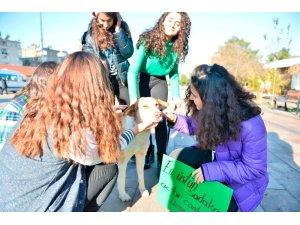 Mardinli öğrenciler hayvanlar için mama kabı ve yuva yaptı
