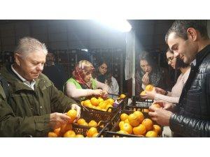 Rus veteriner hekimlerinden Akdeniz meyve sineği incelemesi